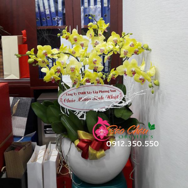 Chậu hoa lan tặng sinh nhật 10 cành tặng sinh nhật
