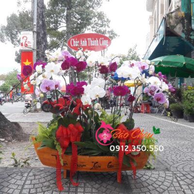 Thuyền hoa lan hồ điệp chúc mừng