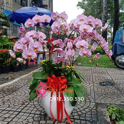 Chậu hoa lan 10 cành tặng sinh nhật