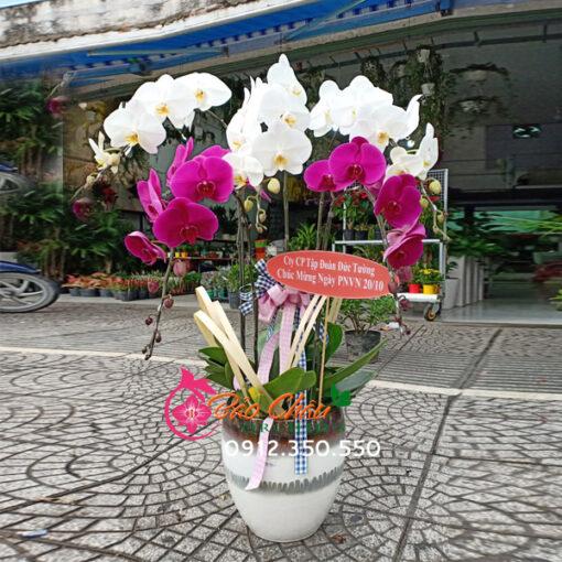 Chậu hoa lan 5 cành mix màu đẹp