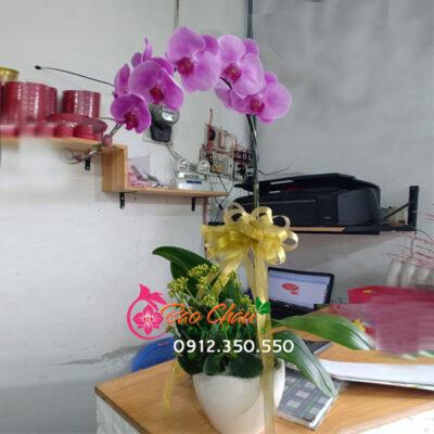 Chậu hoa lan giá rẻ 1 cành đẹp