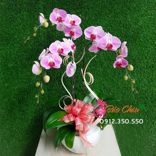 chau hoa lan gia re tang sinh nhat BCO 028