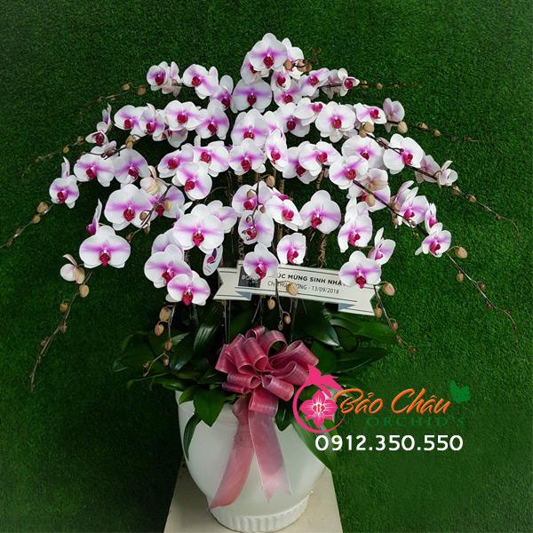 Chậu hoa lan 20 cành siêu đẹp