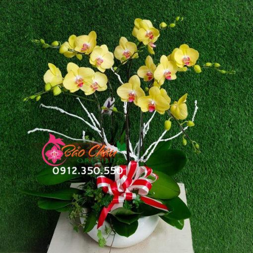 Chậu hoa lan vàng 5 cành