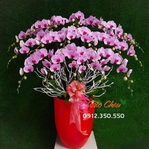 Chậu hoa lan hồng 20 cành siêu đẹp
