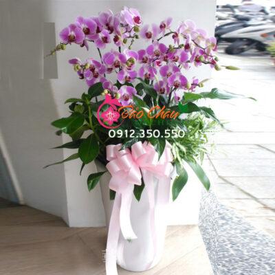Chậu hoa lan hồ điệp màu hồng phấn 9 cây