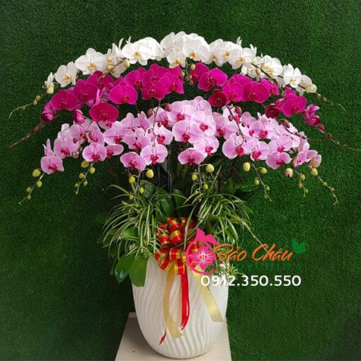 Bình hoa lan tặng dịp tết đẹp 3 tầng