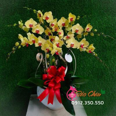 Chậu hoa lan 9 cành vàng tặng khai trương