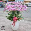Chậu hoa lan hồ điệp màu hồng phấn siêu đẹp