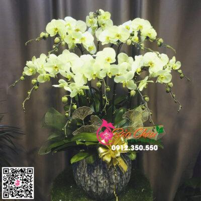 Hoa lan hồ điệp màu xanh bơ 12 cành