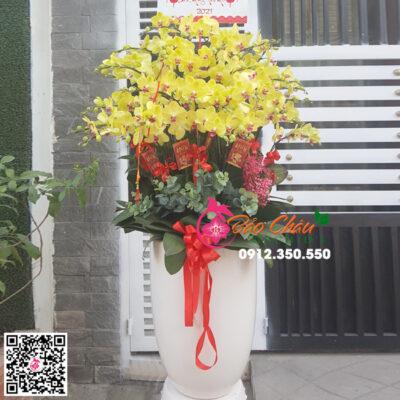 Chậu hoa lan hồ điệp màu vàng siêu đẹp biếu tết chưng tết