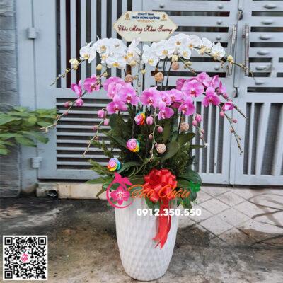Chậu hoa lan hồ điệp đẹp 12 cành mix màu