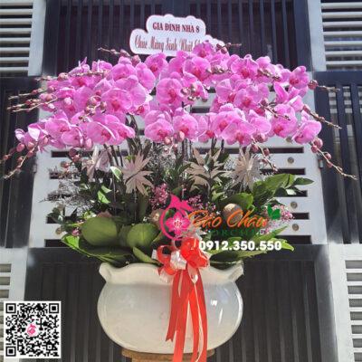 Chậu hoa lan hồ điệp màu hồng phấn siêu đẹp 20 cành