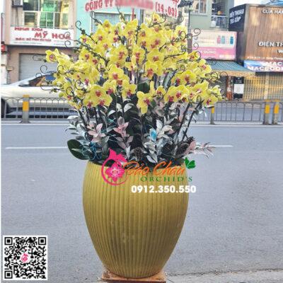 Chậu hoa lan hồ điệp màu vàng siêu đẹp
