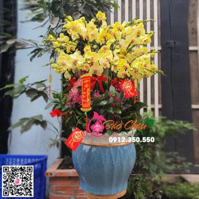 Chậu hoa lan hồ điệp màu vàng siêu đẹp biếu tết