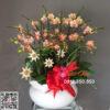 Chậu hoa lan hồ điệp mini, hoa lan hồ điệp nhí